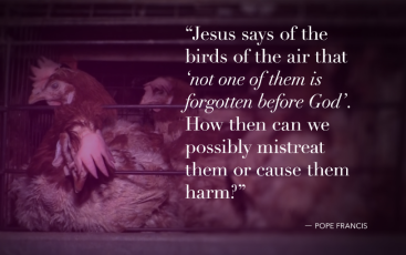 Jesus and Animals 1